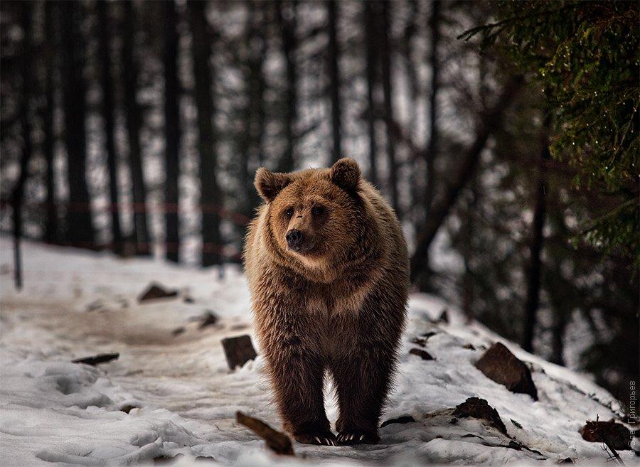 Центр реабилитации медведей Синевир